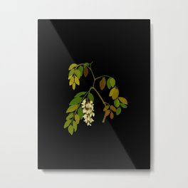 Robinia Pseudacacia Paper Flower Collage Vintage Botanical Floral Art Mary Delany Metal Print