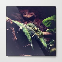 Python in the Branches  Metal Print