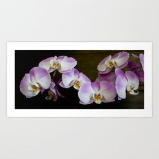 Veronica's Orchids 1 Art Print