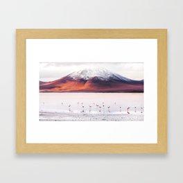 Bolivian Flamingos Framed Art Print