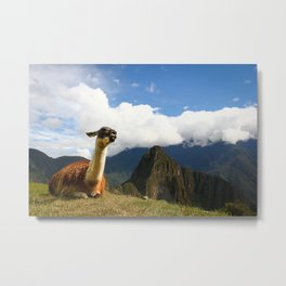 Llama in Machupicchu Metal Print