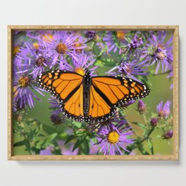 Monarch Butterfly on Wild Aster Flower Serving Tray