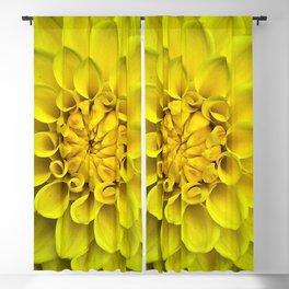 Yellow Dahlia On Black Blackout Curtain