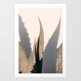 Agave Shadow Art Print
