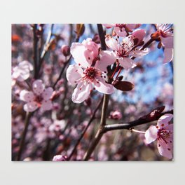 Pink Blossom Photography Print Canvas Print