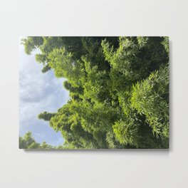 Forest fresh Metal Print