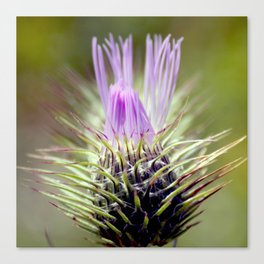 Teen Thistle Flower Macro Canvas Print