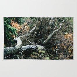 Downed Trees in Fall Season at Denali National Park, Alaska Rug
