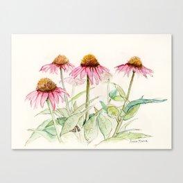 Coneflowers Canvas Print
