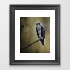 The Young Osprey Framed Art Print