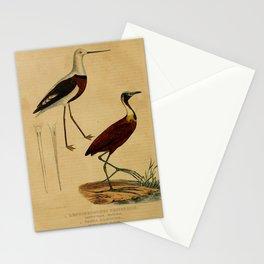leptorhynchus pectoralis parra albinuca13 Stationery Cards