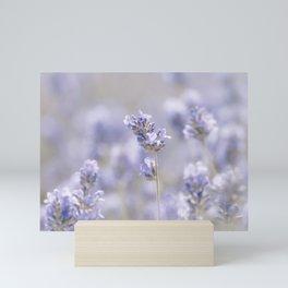 Lavenderfield - Lavender Summer Flower Flowers Floral Mini Art Print