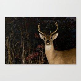 Whitetail Deer Canvas Print
