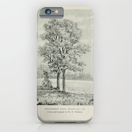 Vintage Print - Familiar Trees and Leaves (1911) - Persimmon Tree iPhone Case