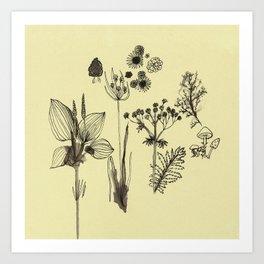 Flowers 5 Art Print