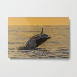 Orca Sunset Breach Metal Print