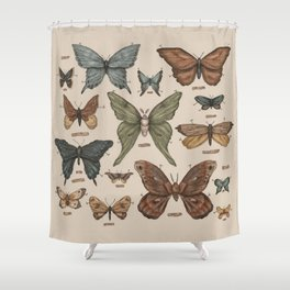 Butterflies and Moth Specimens Shower Curtain