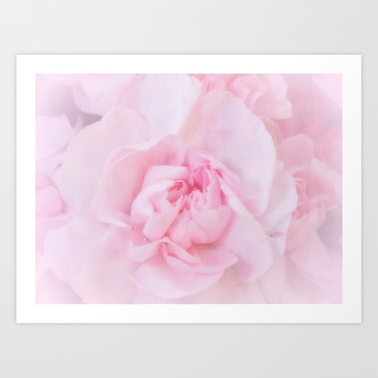 Soft Pink Carnation Art Print