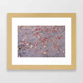 Autumn leaves, colours, gutters in Vancouver, BC Framed Art Print