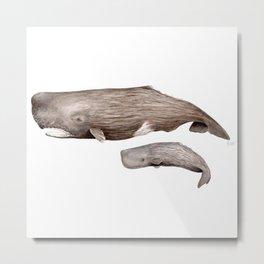 Sperm whale Metal Print