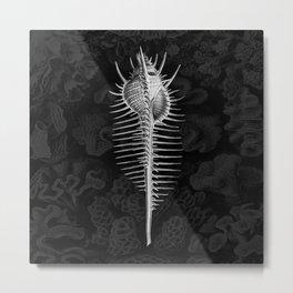 Murex1 (Black & White, Square) Metal Print