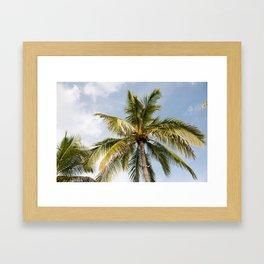 Bahamas Palmtree Framed Art Print