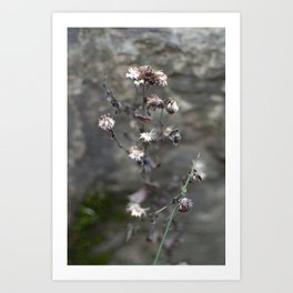 faded flowers 2 Art Print