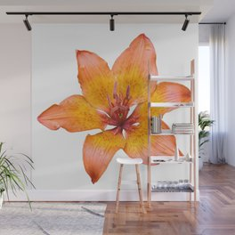 Coral Colored Lily Isolated on White Wall Mural