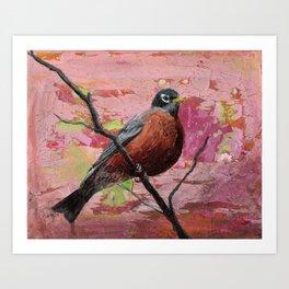 American Robin #2 Art Print