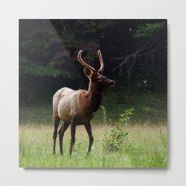 Deer Forest Metal Print