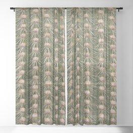 Cactus close up Sheer Curtain