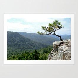 Clifftop Pine Art Print