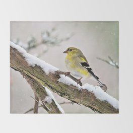 Balancing Act (American Goldfinch) Throw Blanket