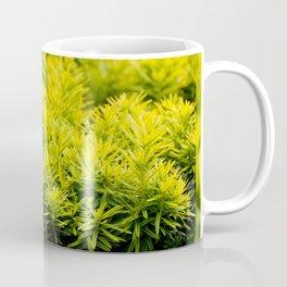 Taxus baccata Yew new shoots Coffee Mug