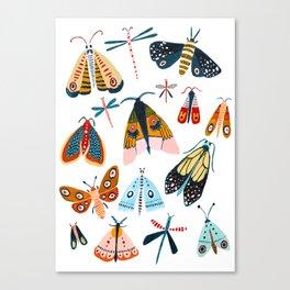 Moth Species Canvas Print