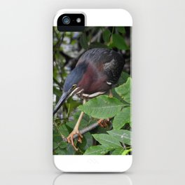 Green Heron on the Hunt iPhone Case