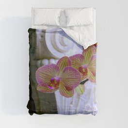An Order Of Corinthian For Here Comforters