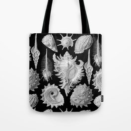 Black and White Beach Shells Tote Bag