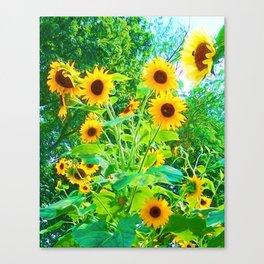 Yellow Splender Canvas Print