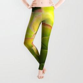 BEAUTIFUL SUCCULENT Leggings