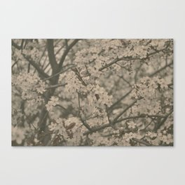 Pastel Flowers Canvas Print