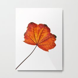 BURNT ORANGE AUTUMN LEAF 2 Metal Print