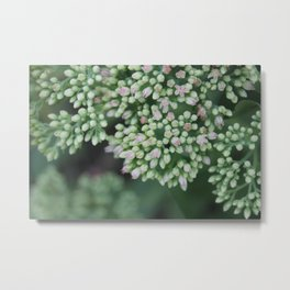 Pastel joy in bloom, flowering plant photography no.4 Metal Print