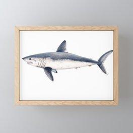 Porbeagle shark (Lamna nasus) Framed Mini Art Print