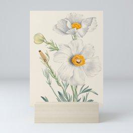 Matilija Poppy Botanical Illustration, Mary Vaux Walcott Mini Art Print