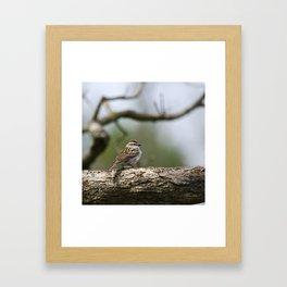 Sparrow in Tree Framed Art Print