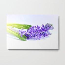 Hyacinthus Metal Print