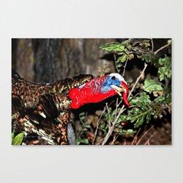 Wild Turkey Close Up Canvas Print