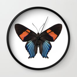 Butterfly species Ancyluris miranda Wall Clock