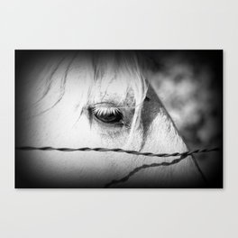 Horse's Eye: Black and White Photo Canvas Print